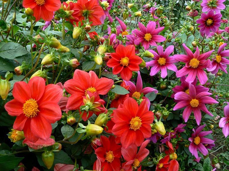 Доброе, картинки цветов веселые ребята
